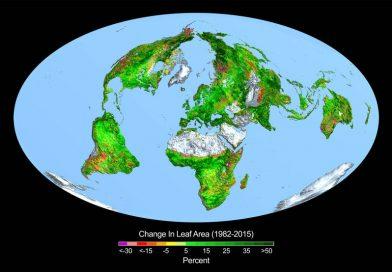 Jordens vegetasjon økt med 2 x USA's areal!